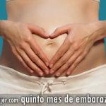 Quinto mes de embarazo: desarrollo y crecimiento del bebé